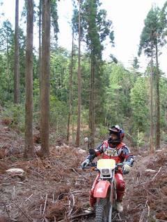 伐採山とKさん
